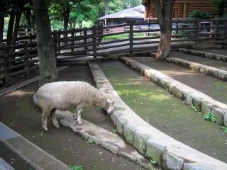 http://odekake.info/kanagawa/12_zoo/makigahara/IMG_15471.jpg
