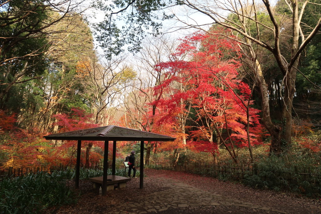 四季の森公園の紅葉