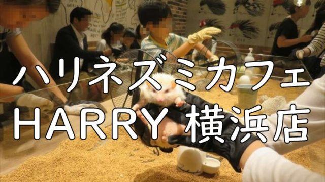 ハリネズミカフェ HARRY 横浜店