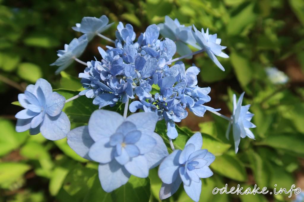 八景ブルーの庭