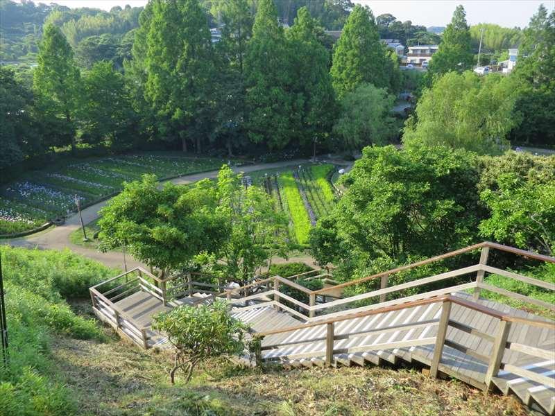 横須賀しょうぶ園の階段