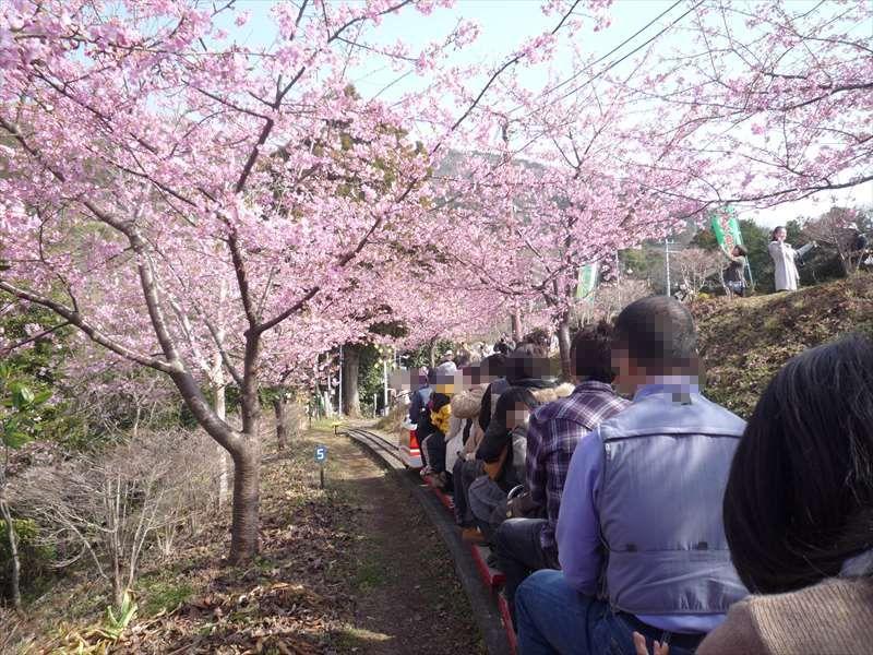 桜の中を通るSL