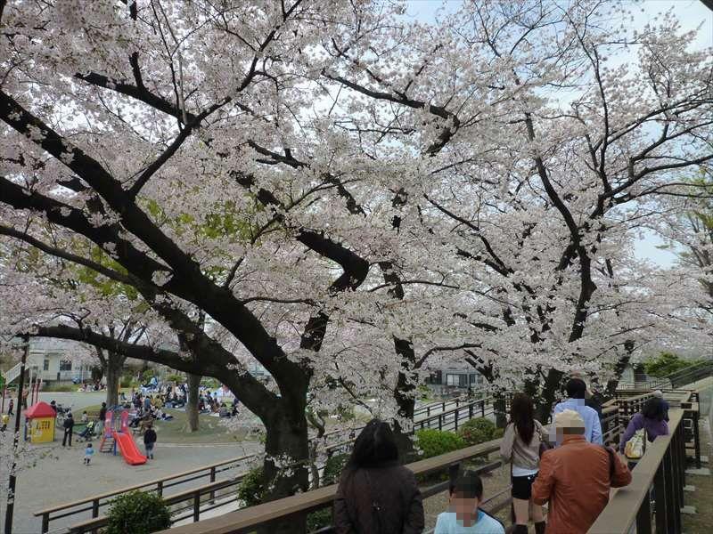 園内の桜の木