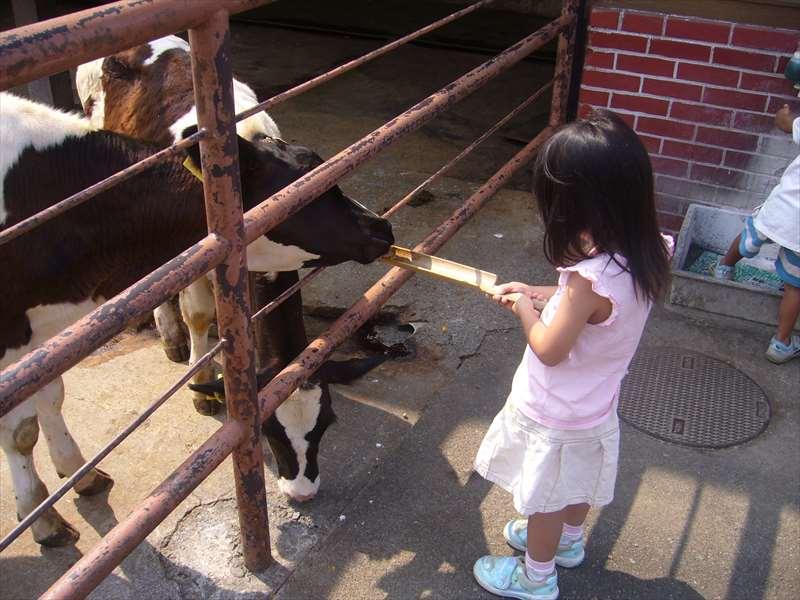 牛と羊のエサ