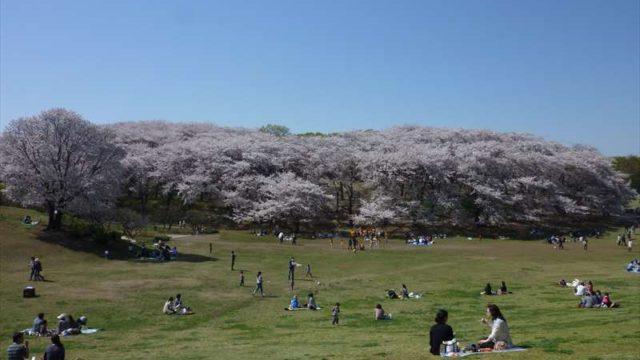 広大な芝生広場