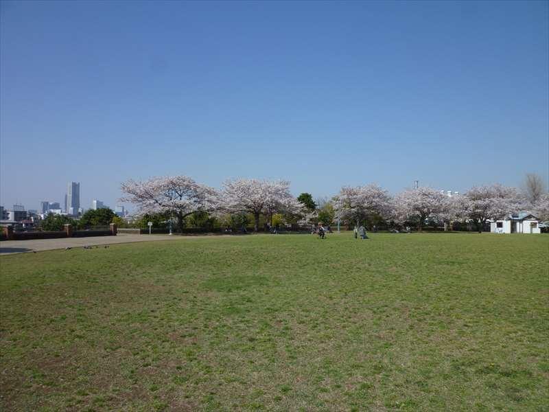 芝生広場 (公園北側)
